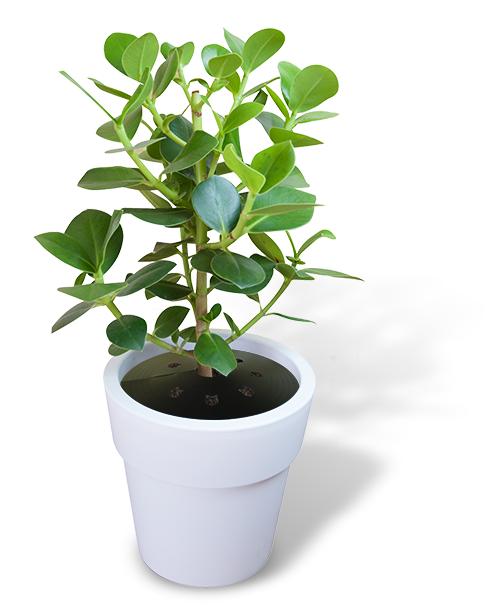 Plant vrij web